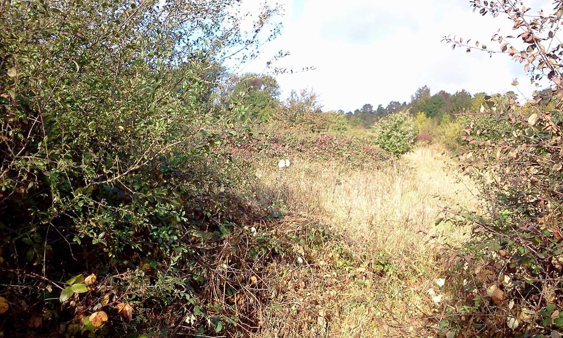 plots-of-land-for-sale-henley-on-thames-uk