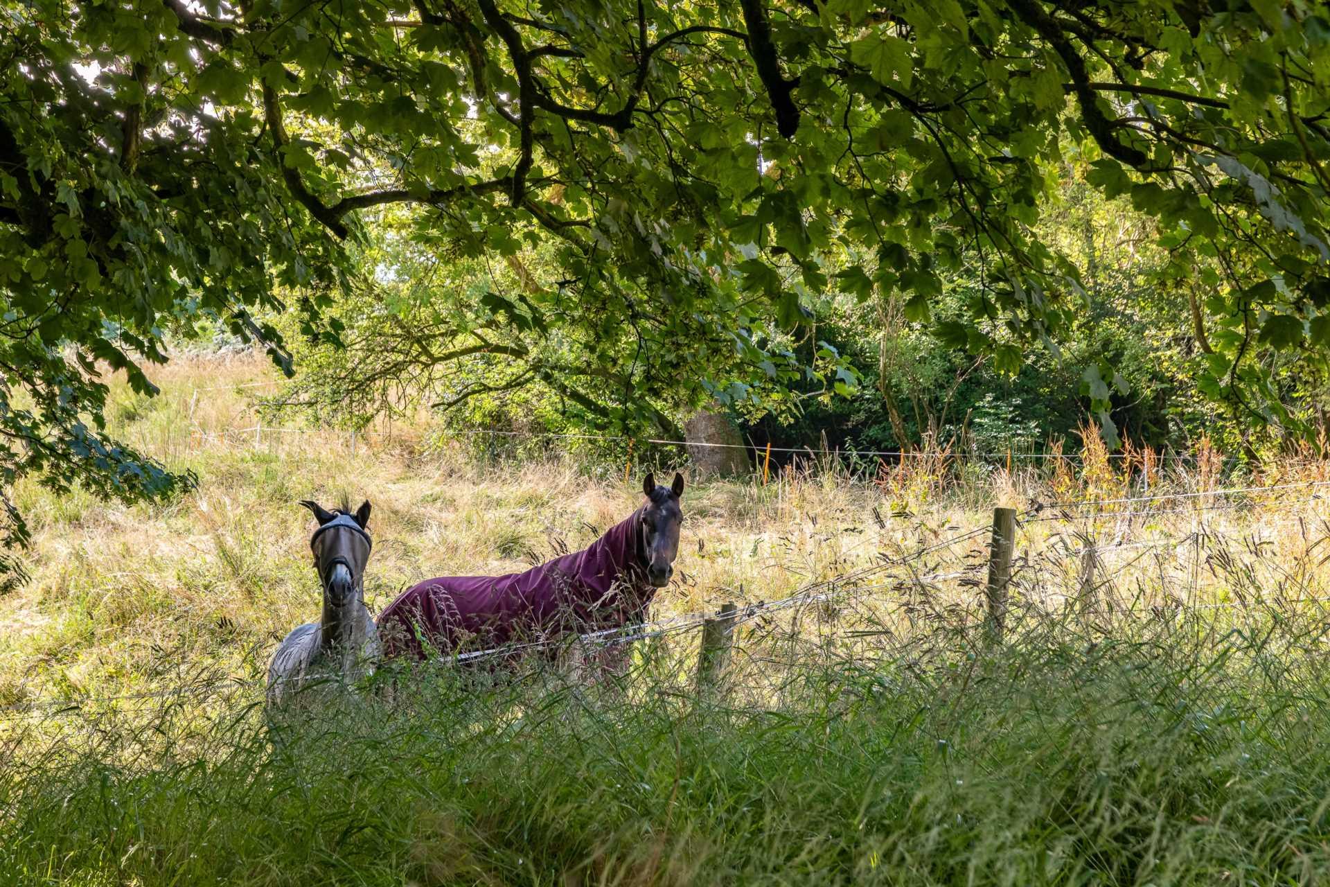 Coach House Estate, Battlefields, Lansdown, Bath, Image 30
