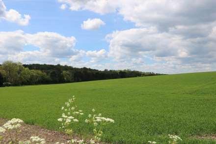 Hogmoor House, Maidenhatch, Pangbourne, Berkshire, Image 3