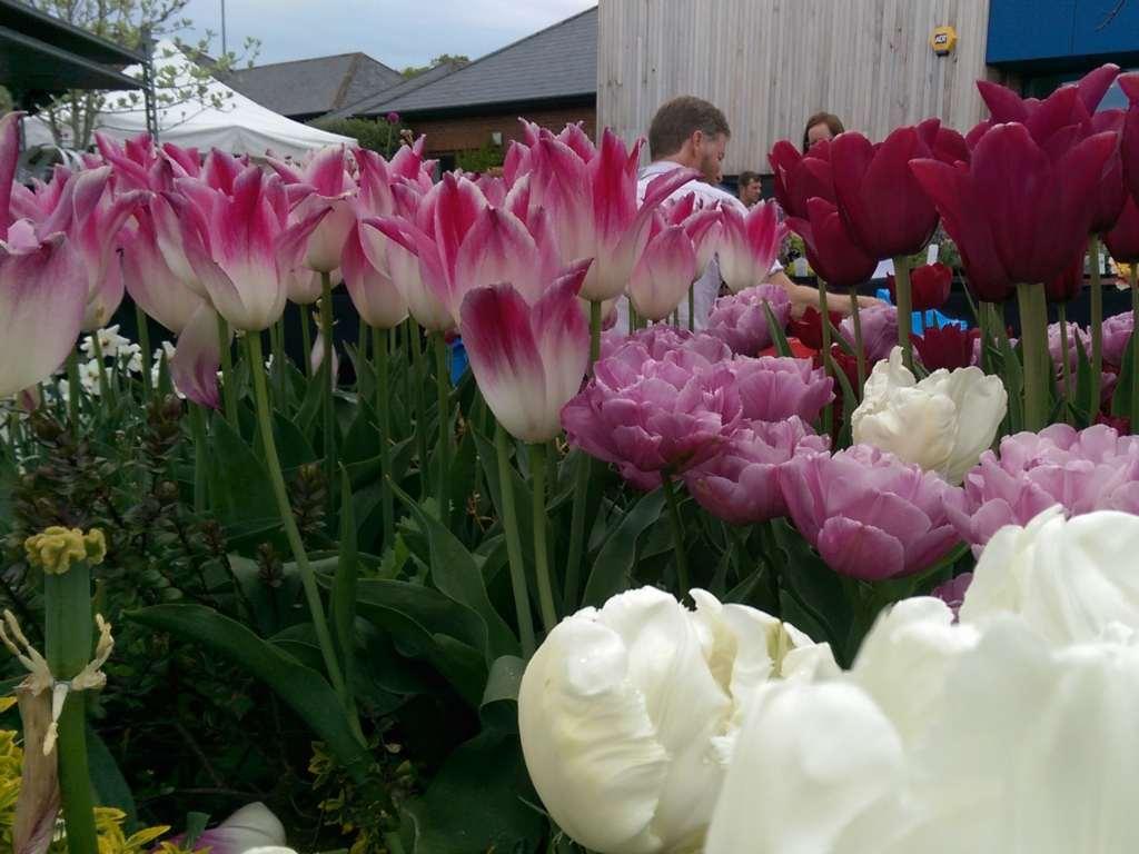 Support for Colyton Grammar School Garden Fair