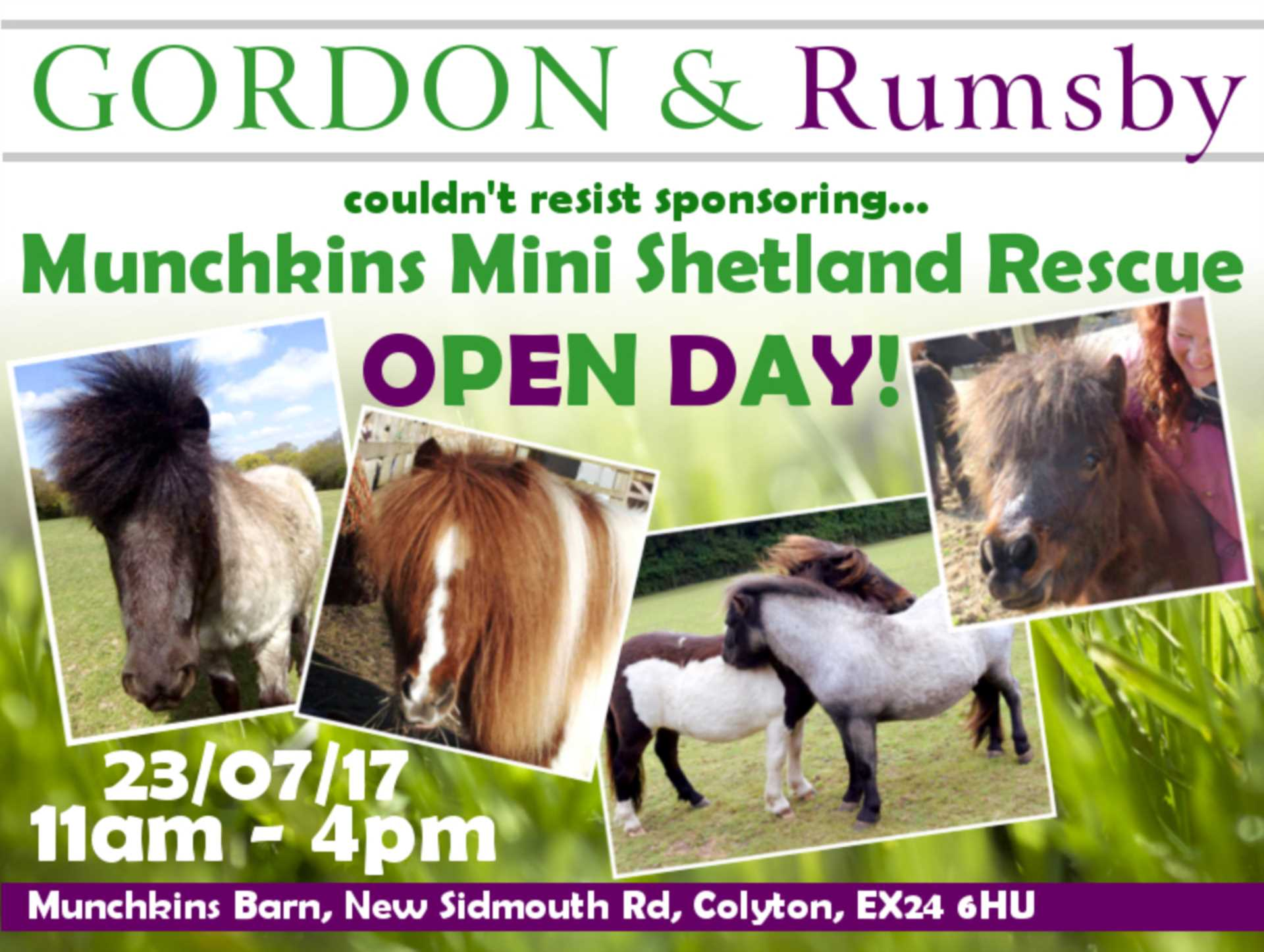 Munchkins Mini Shetland Rescue Open Day!