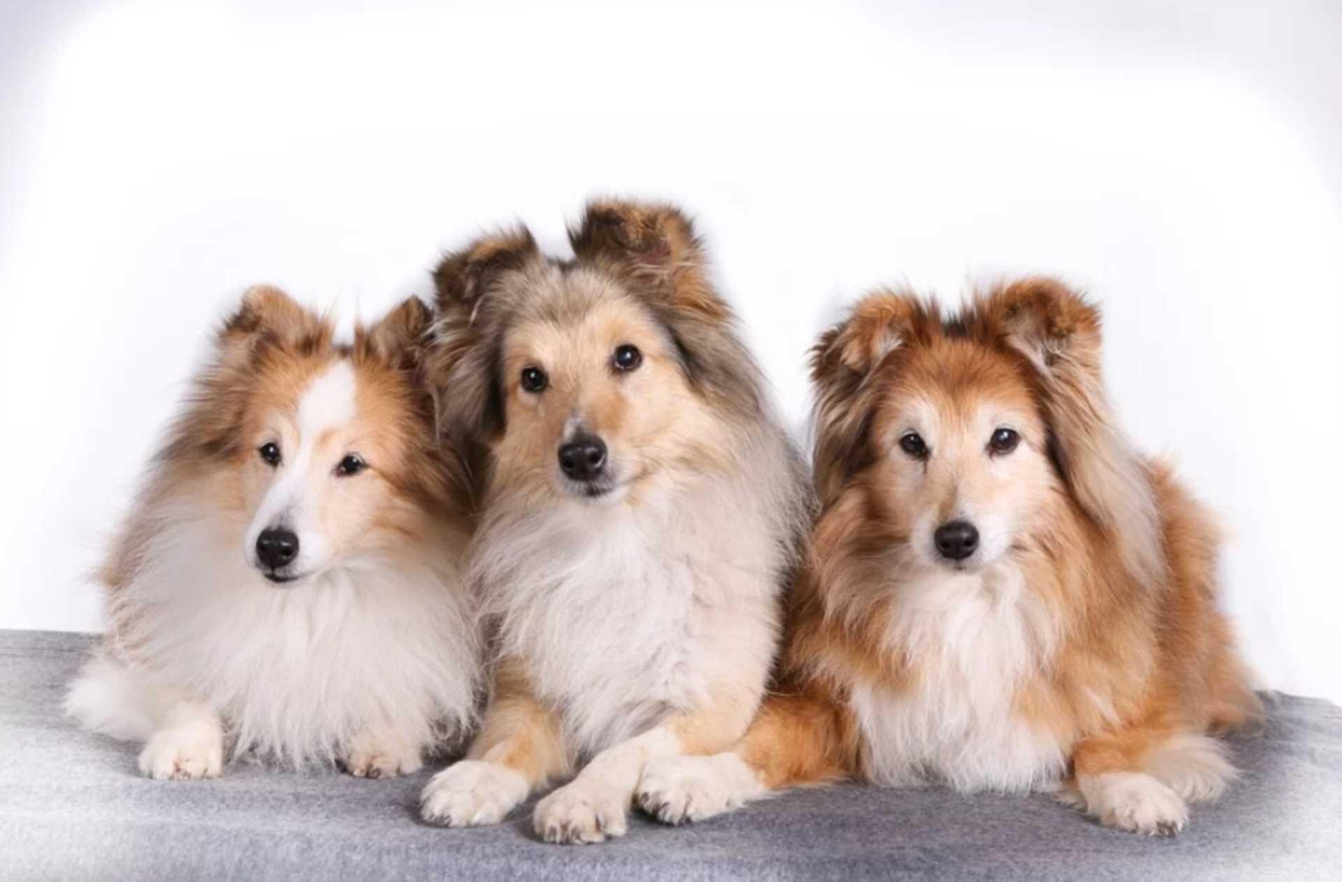 Tenancy Overhaul - Pets Allowed?