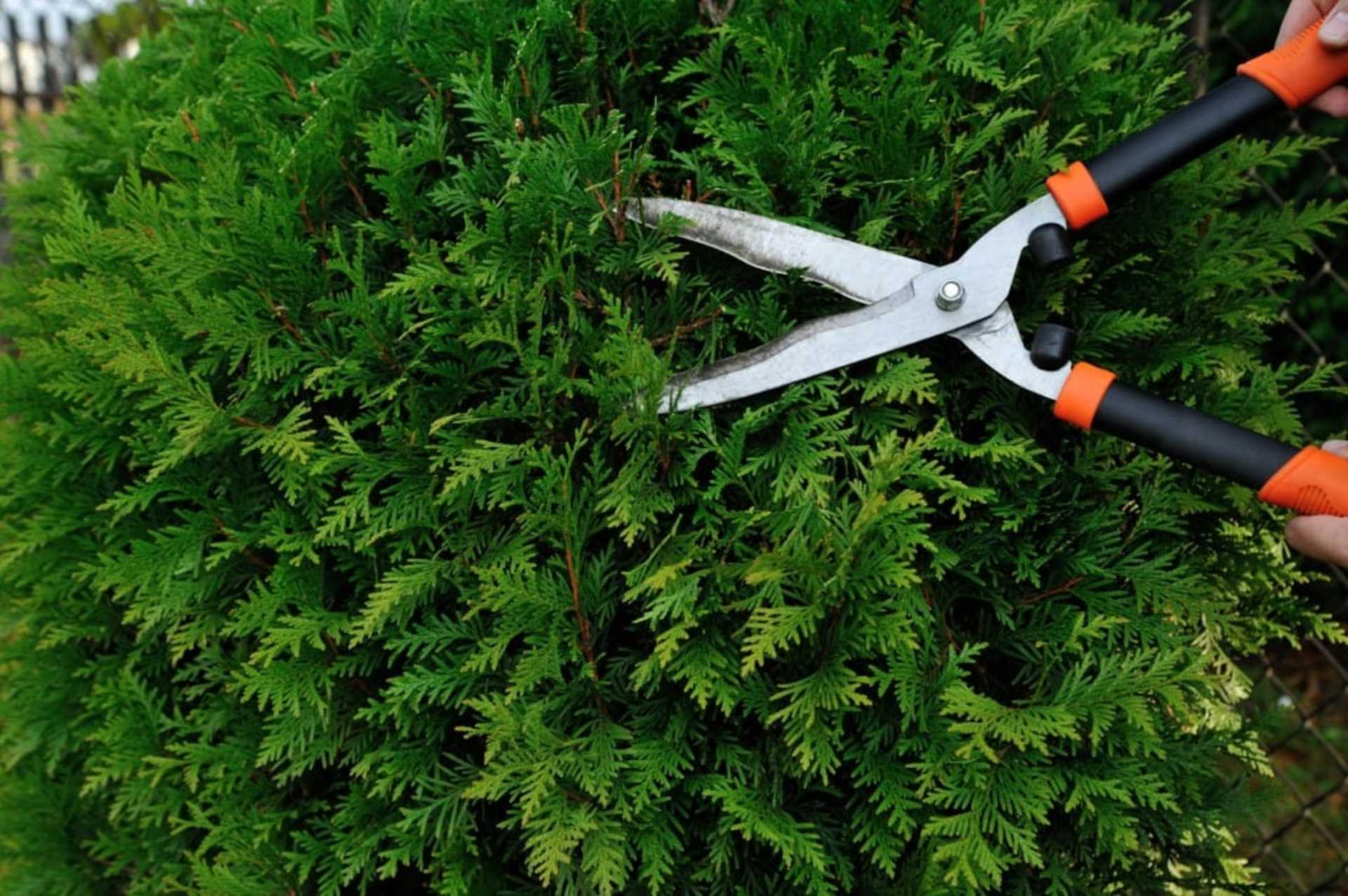 What you can do if your neighbour`s overgrown hedge is spoiling your garden