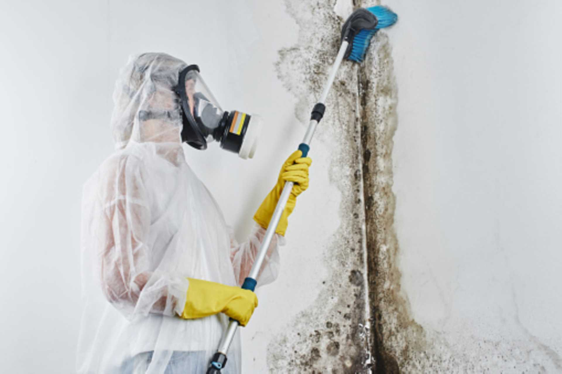 Preventative Measures to Help Reduce the Likelihood of Mould Growth