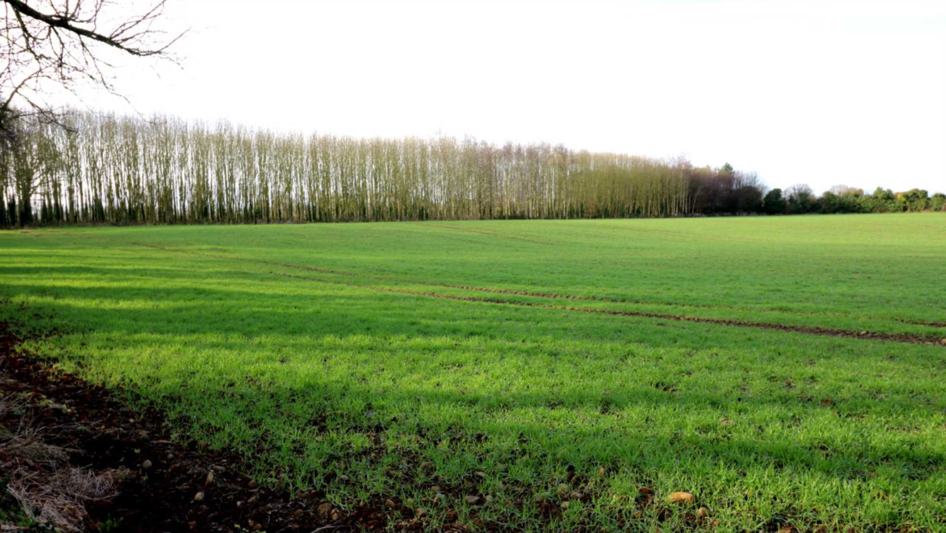 Farmland Required For Lease