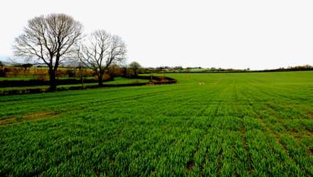 Farm Land, Tybressey, Figlash, Carrick on Suir, Co. Tipperary